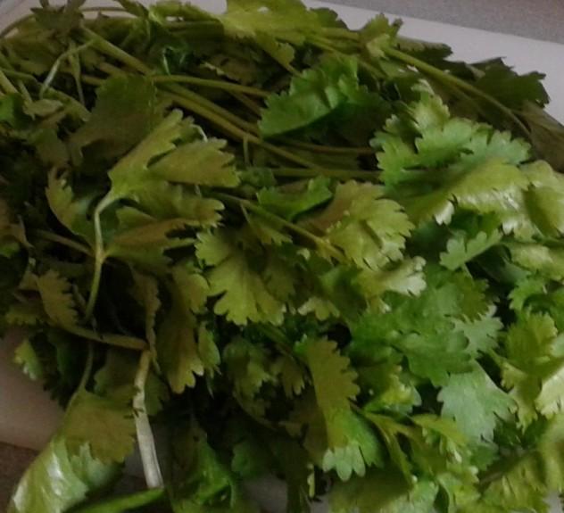 cilantro para ceviche